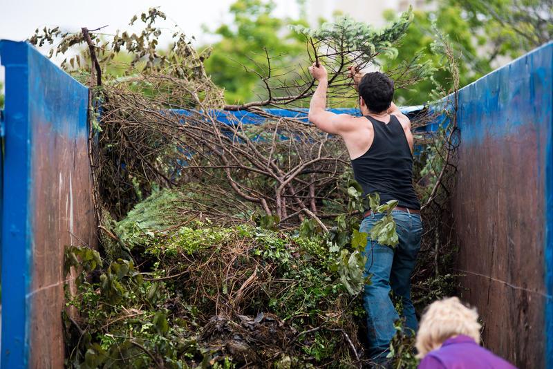 Tree Removal Dumpster Services-Colorado's Premier Dumpster Rental Services